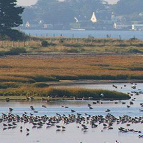 reserve-ornithologique-sarzeau